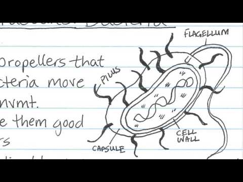 Cornell Notes Method of Taking Notes