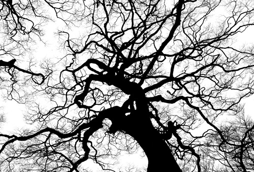 tree-894903