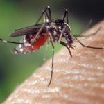 Wie man Mücken im Schlafzimmer bekämpft
